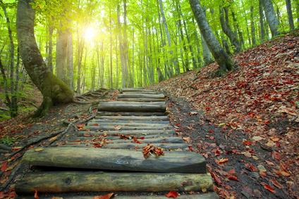 forest. wooden bridge