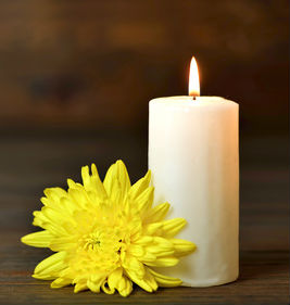 Candle Flower cropped