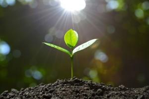 Plant Grow Seedling Sunshine