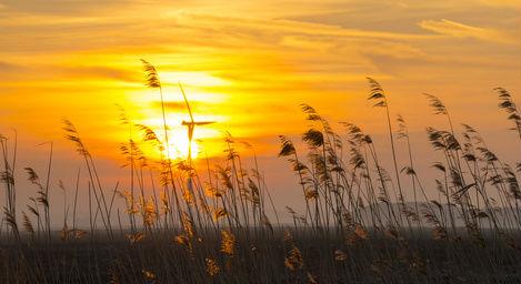Sun Wheat Field